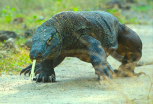 One Day Tour To komodo Island